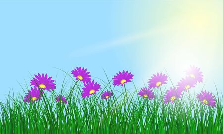 transparency color: Meadow color background with and sun. All objects are separated. Vector illustration with transparency and mesh. Illustration