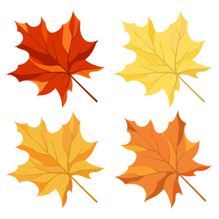 Autumn color maple leaves set
