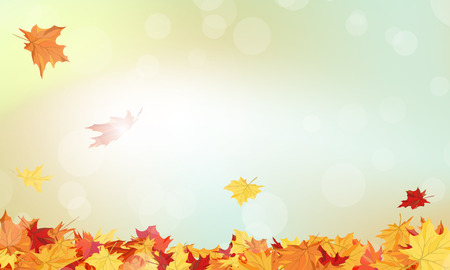 Autumn  Frame With Falling  Maple Leaves on Sky Background 矢量图像