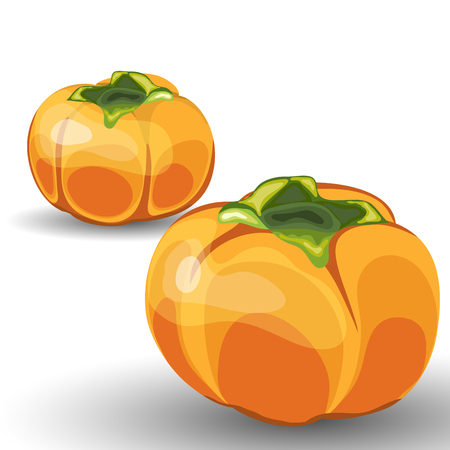 reaping: Set of Two Beautiful Glossy Orange Persimmon over White Background. Cute Icons Suitable For Creating Food, Thanksgiving Day, Harvest Day Designs. Vector Illustration. Illustration