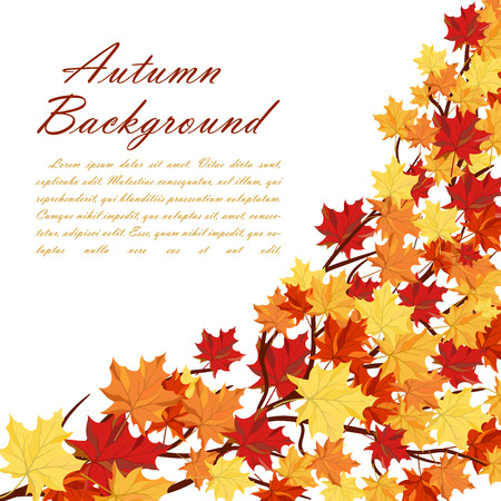 autumn leaf frame: Autumn  Frame With Maple Leaves on Branches of Tree  Over White Background. Elegant Design with Text Space and Ideal Balanced Colors. Vector Illustration.