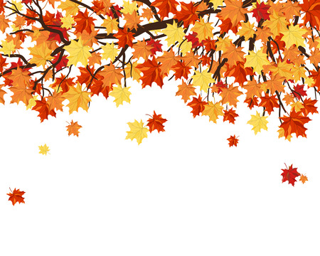 Autumn  Frame With Maple Tree Branches and Leaves Over White Background. Elegant Design with Text Space and Ideal Balanced Colors. Vector Illustration. Vettoriali