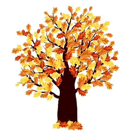 balanced: Autumn Oak Tree With Color Leaves on White Background. Elegant Design with Ideal Balanced Colors. Vector Illustration.