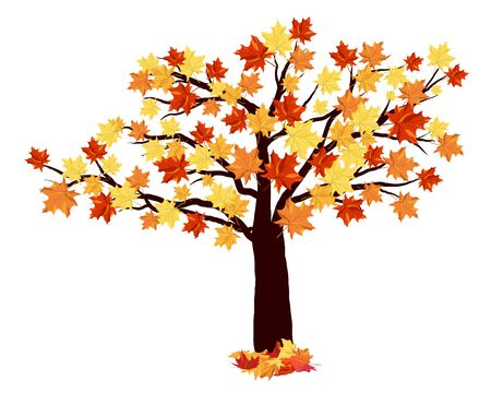 maple tree: Autumn Maple Tree With Falling Leaves on White Background. Elegant Design with Ideal Balanced Colors. Vector Illustration. Illustration