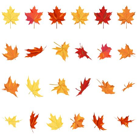 fall leaves on white: Set of autumn maple leaves in different shapes over white background. Ideal for creating fall designs. Vector illustration.