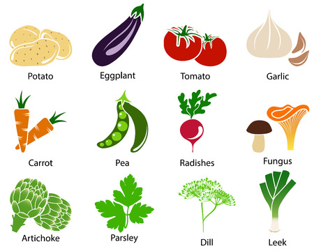 garlic: Set of cute vegetable icons with title over white background. Vector illustration.