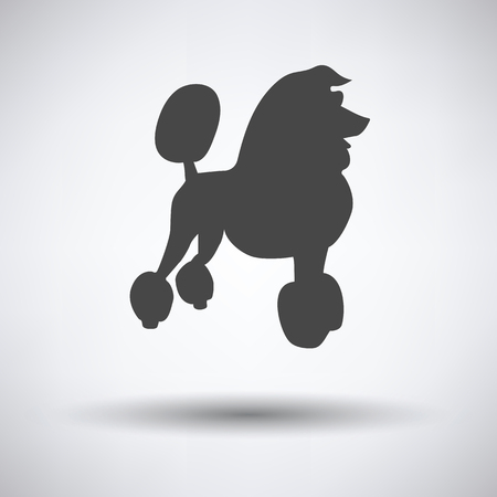 pet breeding: Poodle icon on gray background with round shadow. Vector illustration.