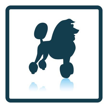 pet breeding: Poodle icon. Shadow reflection design. Vector illustration. Illustration