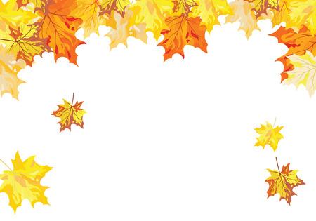 Autumn  Frame With Falling  Maple Leaves on White Background. Elegant Design with Text Space and Ideal Balanced Colors. Vector Illustration. Illustration