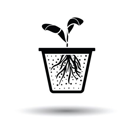 young leaves: Seedling icon. White background with shadow design. Vector illustration. Illustration