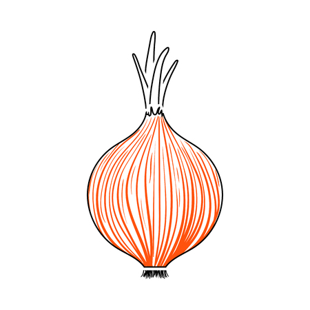 Onion Icon. Thin Line With Orange Fill Design. Vector Illustration. 向量圖像