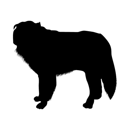 Polish Sheepdog Silhouette. Smooth Vector Illustration.