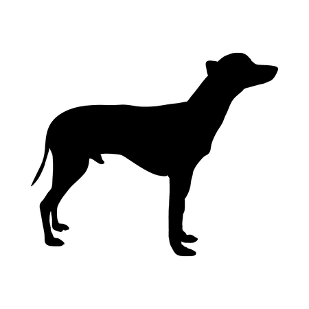 Mexican Naked Dog Silhouette. Smooth Vector Illustration.  イラスト・ベクター素材