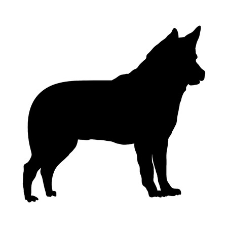 Israel Canaan Dog Silhouette. Smooth Vector Illustration.  イラスト・ベクター素材