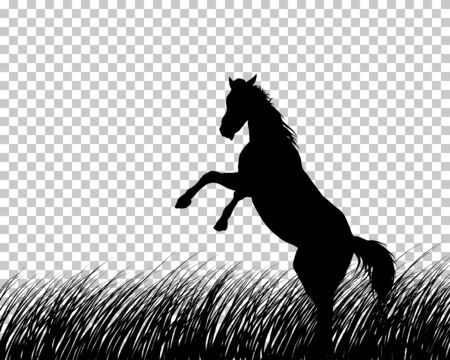 Horse silhouette on Grass With Transparency Grid Background. Vector Illustration. Ilustração