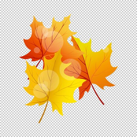 Falling maple leaves with transparency grid on back. Vector Illustration.