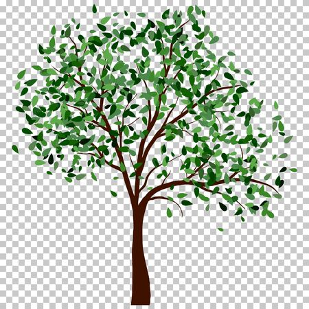 Summer tree with green leaves.vector illustration.
