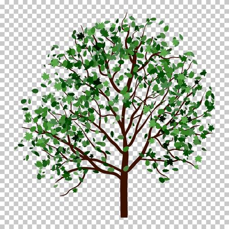 Summer tree with green leaves. vector illustration.