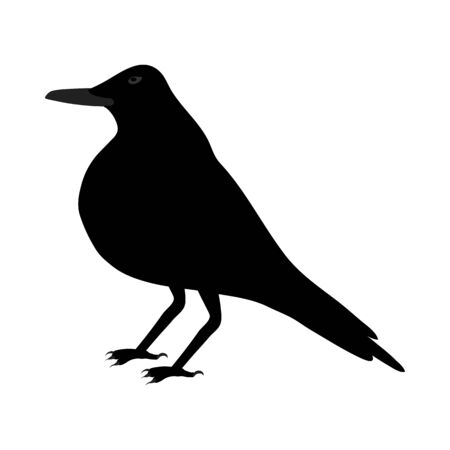 Black Crow Over White Background for Creating Halloween Designs.