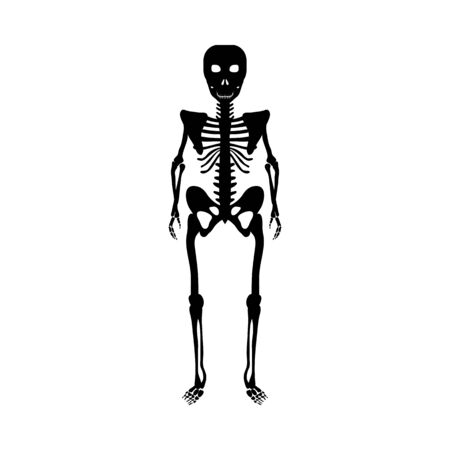 Skeleton Over White Background for Creating Halloween Designs.