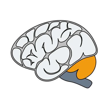 Brain Icon. Editable Outline With Color Fill Design. Vector Illustration. Stock Illustratie