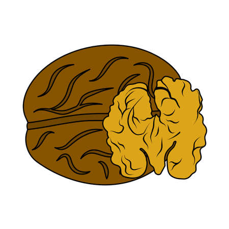 Walnut Icon. Editable Outline With Color Fill Design. Vector Illustration. Ilustração