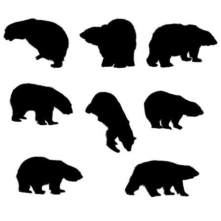8 bear silhouettes. Smooth and Clean Lines. High detailed bear silhouettes. Vector Illustration.