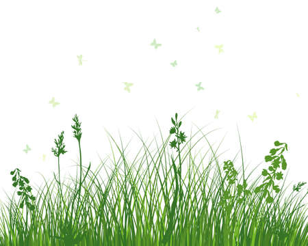 Green spring meadow grass. Fresh color plants, seasonal growth grass, separated botanical elements, herbs. Natural lawn bushes, floral border. Vector Illustration.