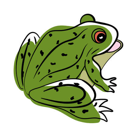 Doodle sketch frog with color fill. Simple design suitable for making greeting cards. Vector illustration.