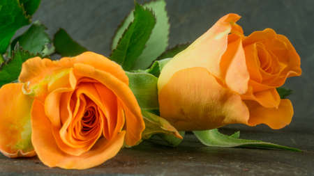 rosas naranjas: Orange roses on slate, background Foto de archivo