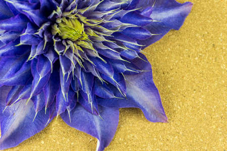 clematis: Purple blossom of a clematis on a wooden board Stock Photo