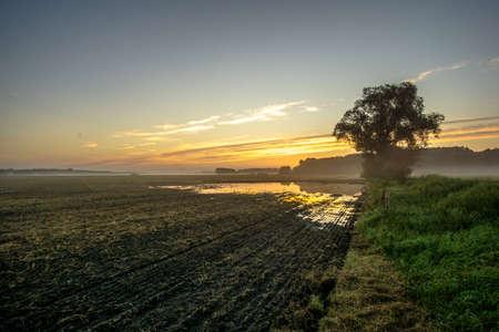 oklahoma: Corn field at sunrise and flood Stock Photo