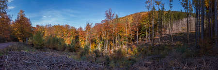 A panorama in the mountains with autumnal colored trees in blue sky
