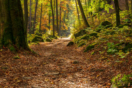 A forest path in autumn with colorful leaves and sunshine