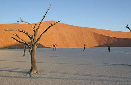 sandbank: Golden Tree