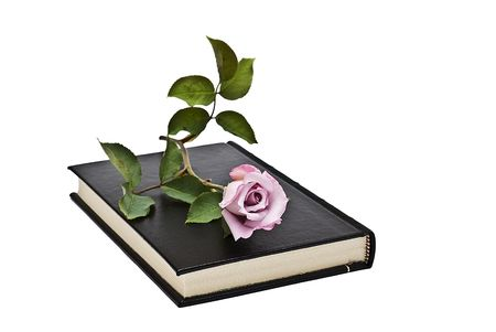 prose: A fresh rose on a book.