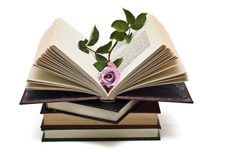 prose: A pink rose on an open book.