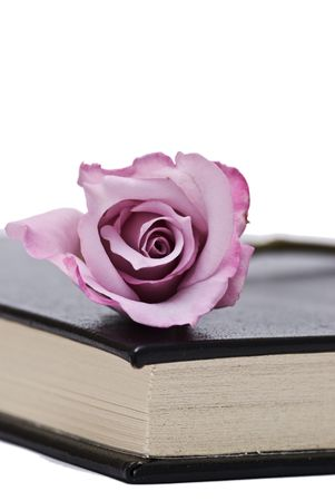 A rose on the corner of the book. photo