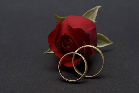 alliances: Red rose and wedding rings.