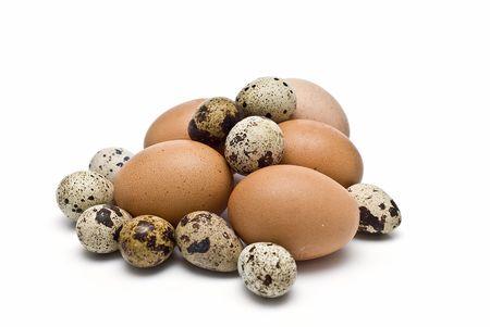 gallina con huevos: Huevos de codorniz y gallina. Foto de archivo