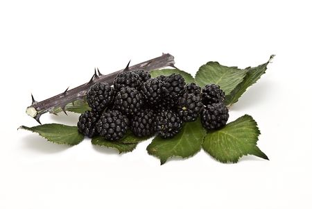 Blackberries with a branch and leaves. Stock Photo - 6541012