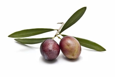 good cholesterol: Olives on its branch.