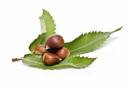 Chestnuts with leaves isolated on a white background. photo