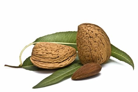 almond tree: Almonds with its leaves.