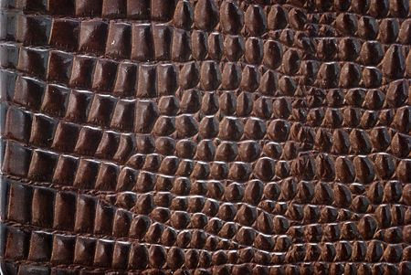 Reptile leather texture. Stock Photo - 6743009
