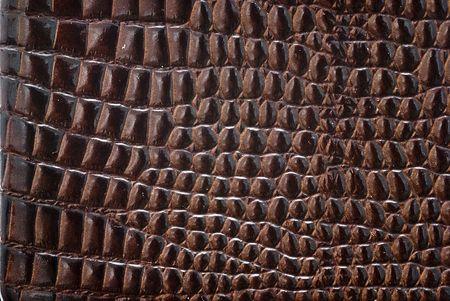 Reptile leather texture. Stock Photo - 6743009