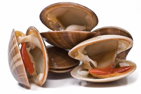 Smooth clams. Stock Photo