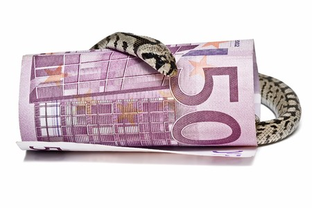 A snake looking after a big bank note. Stock Photo - 7128445