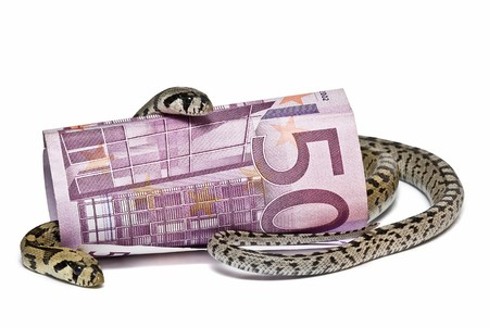Two snakes looking after a big bank note. Stock Photo - 7128444