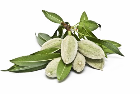almonds: A branch with green almonds on a white background.